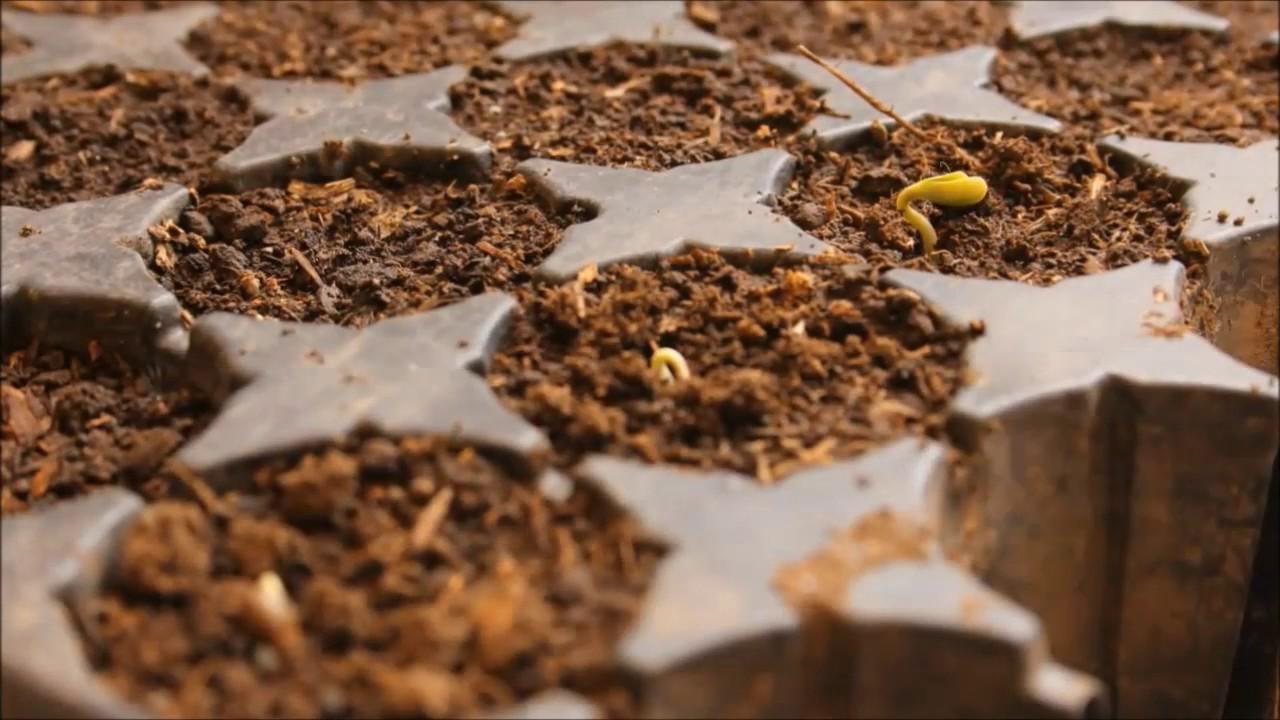 Оптовая и мелкооптовая продажа пакетированных и весовых семян, газонных трав и удобрений собственного бренда