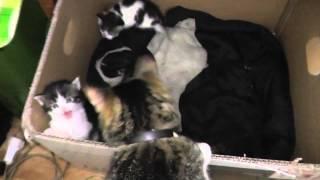 Котята из порядочной семьи