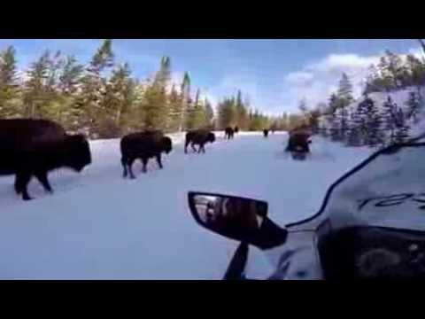 Old Faithful Snowmobile Tours - Jackson, WY - sneak peek!!!