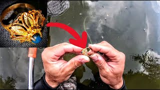 AMAZING GOLD RING found treasure hunting with a metal detector in a lake - metal detecting XP Deus