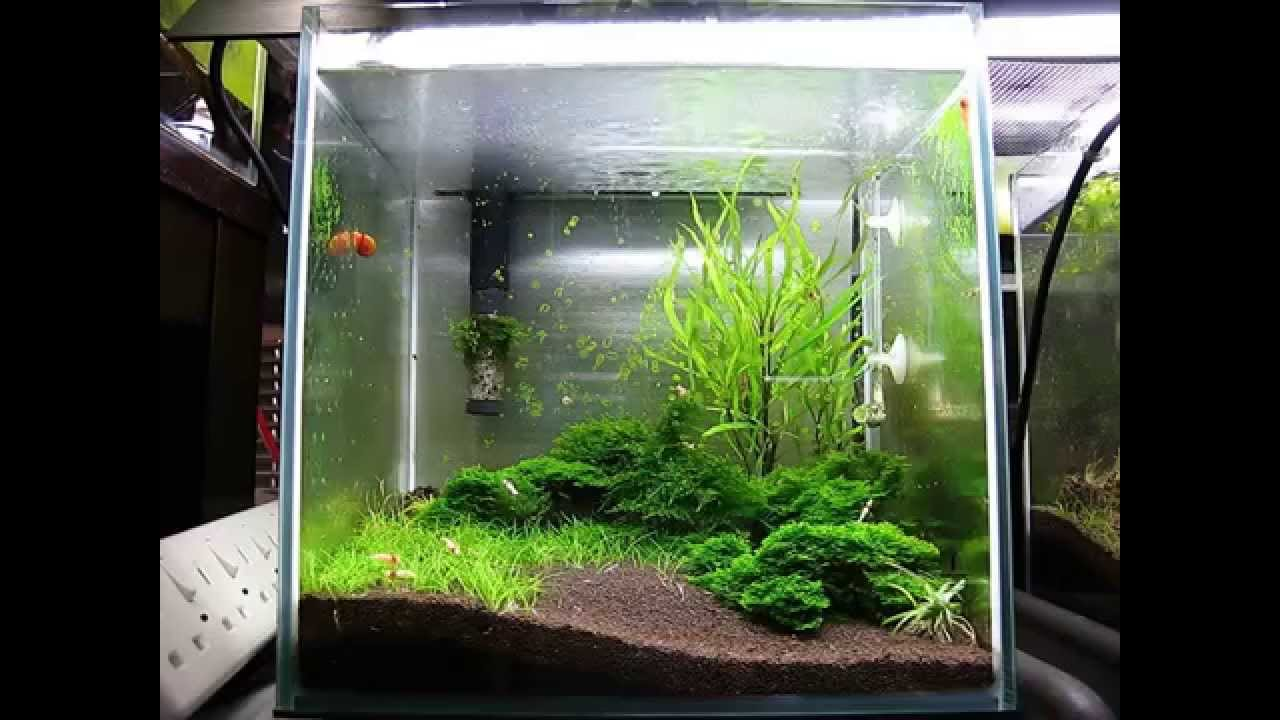 Movie 30cm cube crs tank 4th months hd youtube for Fish tank full movie