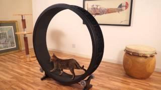 Cat Exercise Wheel - Kickstarter Video