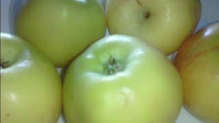 Как заморозить яблоки на зиму в морозилке.Заморозка яблок