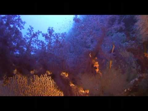 Abili Ali Mer rouge Egypte