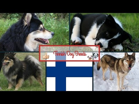 Finnish Dog Breeds