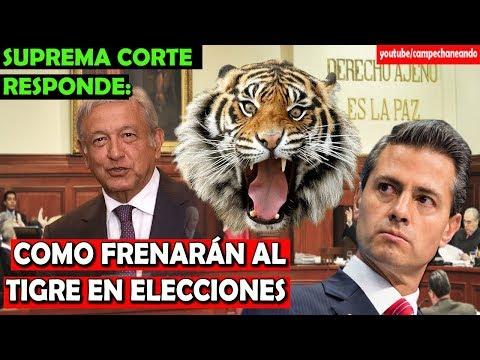 López Obrador advierte del Tigre, y la Suprema Corte ¡Responde! - Campechaneando