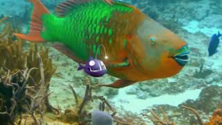 Рыбки, мультфильм, трейлер, премьера в РФ 9 февраля 2017 г.