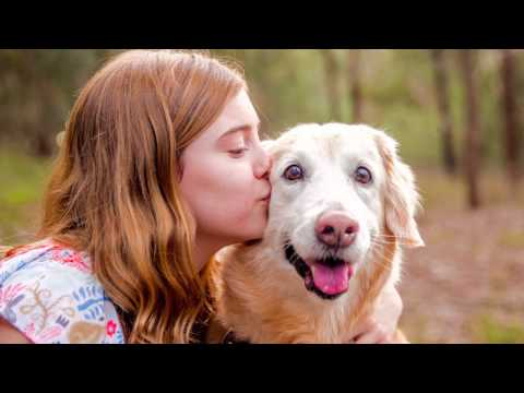 Tasha and Ruby   Golden Retrievers   Ragamuffin Pet Photography