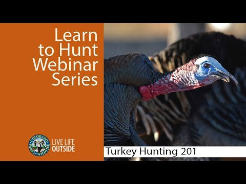 Colorado Turkey Hunting 201