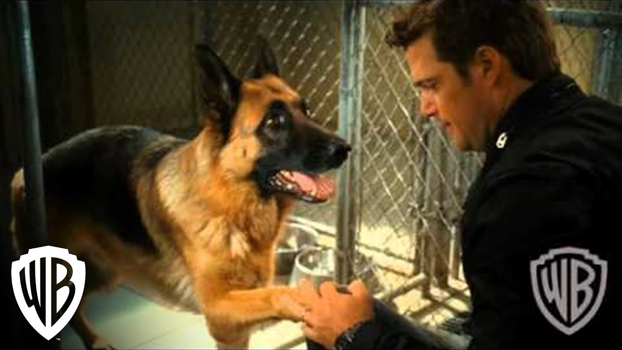 """Download Cats & Dogs: The Revenge of Kitty Galore   """"Top Dog"""" Clip   Warner Bros. Entertainment"""