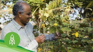 Protecting Endangered Vegetables