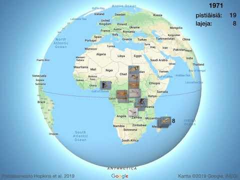 Rhyssinae Afrikassa Hopkins Et Al 2019 Youtube