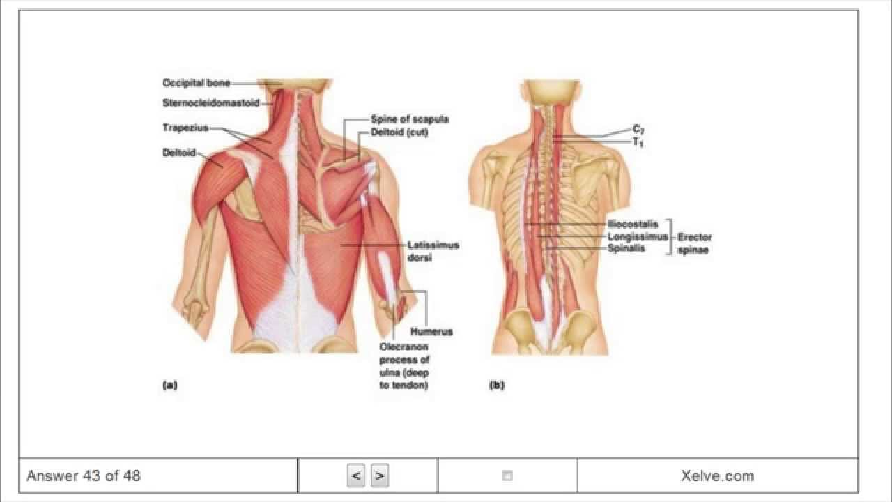 Introduction to Human Anatomy and Physiology - 6 The Muscular System ...