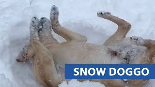 Dog Makes Snow Angels With Owner