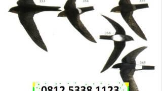 gloria bird nest, harga baru, forum, Sarang Burung walet