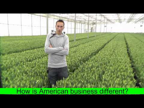 Internship in a cut flower / bulb forcing greenhouse in the USA arranged by The Ohio Program