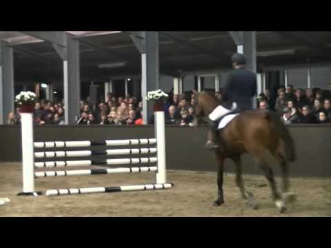 Florian, Zirocco Blue x Cardento, Hengstenshow Tewis 2016, A