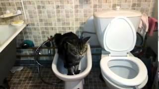 Приколы с животными Кот ходит в туалет в биде