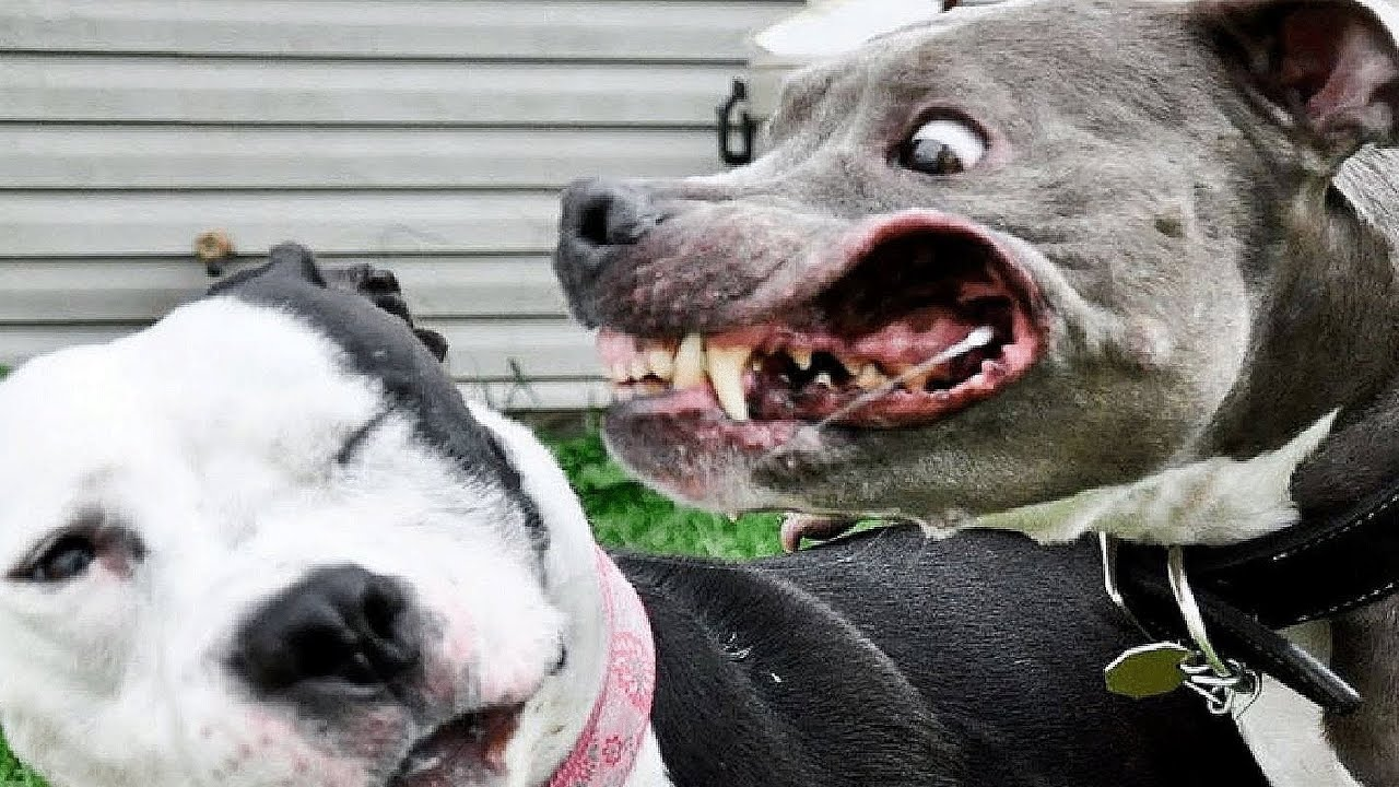 Big Aggressive Dog Breeds