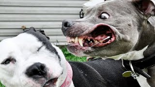 5 Most Dangerous Dog Breeds