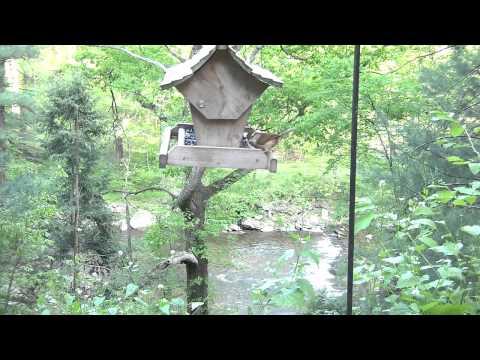 Bird feeder May 17th 2013 (North Eastern United States)