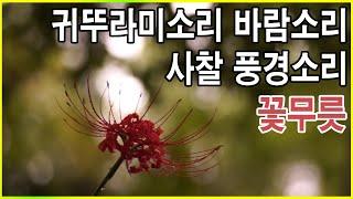 자연의소리 - 귀뚜라미소리 바람소리 사찰 풍경소리  종소리 [백색소음]