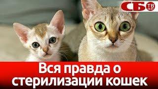 Стерилизация кошек | зачем это делать | мифы и правда