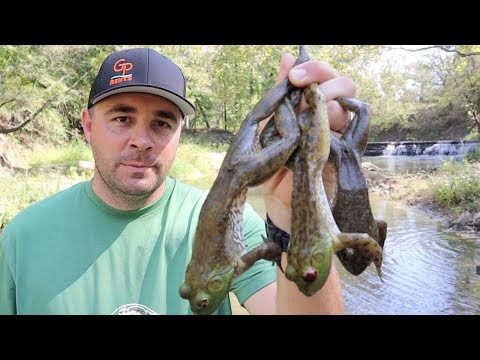 Creek Monster Bullfrogs {Catch Clean And Cook}
