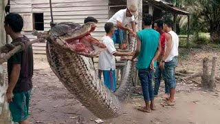 15 Shockingly Large Creatures That Actually Exist