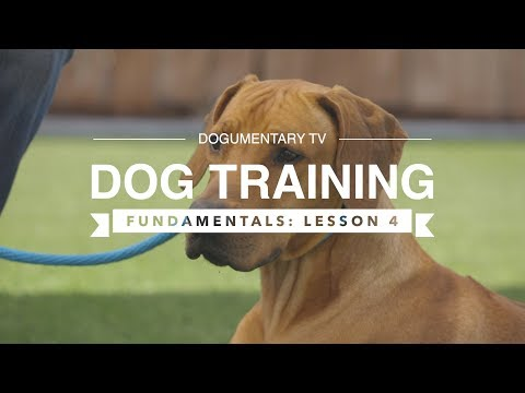 DOG TRAINING FUNDAMENTALS: LESSON 4: GOING TO PLACE