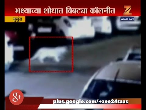 Mulund   Cheetah In Colony