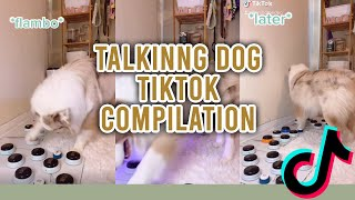 Talking dog Tiktok compilation | Flambo the dog