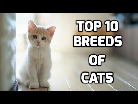 Top 10 Breeds of Cats (Types of Cats)