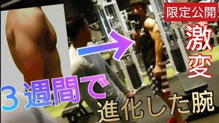 【肩トレ】たった3週間で《貧弱な腕》→《マッチョ》な腕に仕上げた肩のトレーニングを紹介!!