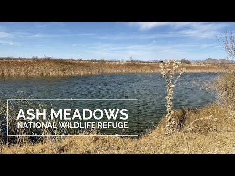 Ash Meadows National Wildlife Refuge, Amargosa Valley, Nevada