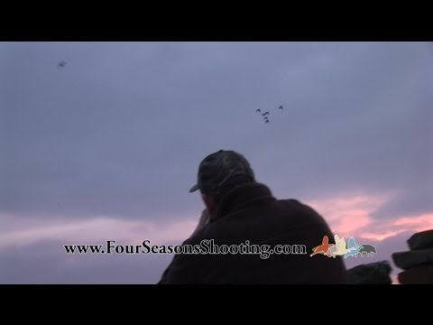 Orkney Kirkwall Scotland Grey-lag goose shooting / hunts Decoying  Orkney Shooting Holidays 2016/17