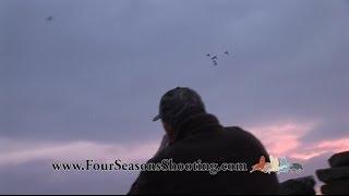 Orkney Kirkwall Scotland Grey-lag goose shooting / hunts Decoying  Orkney Shooting Holidays 2015/16