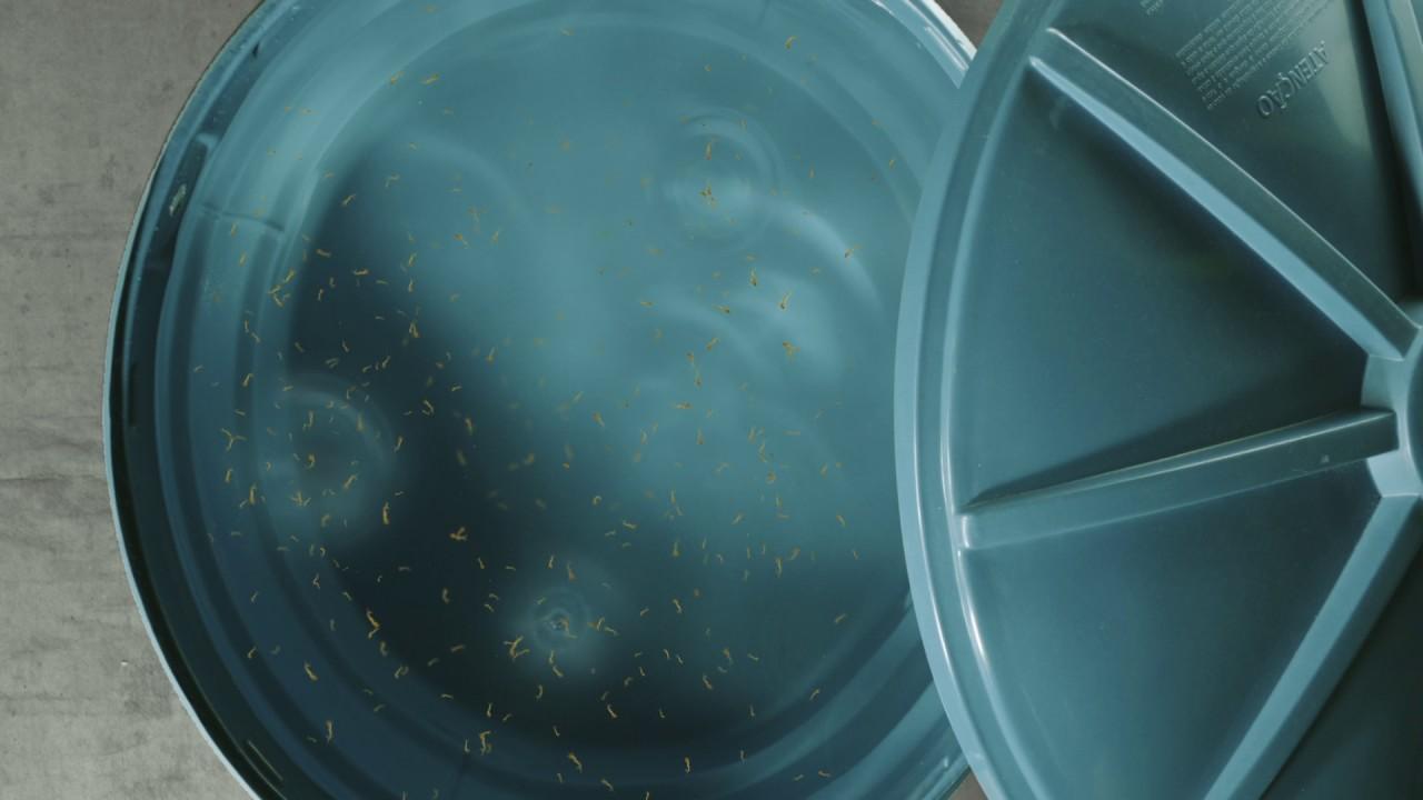 R5 (BA) - GOV BAHIA - Combate Aedes