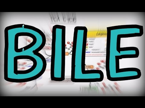What is Bile? Components, Function, Storage