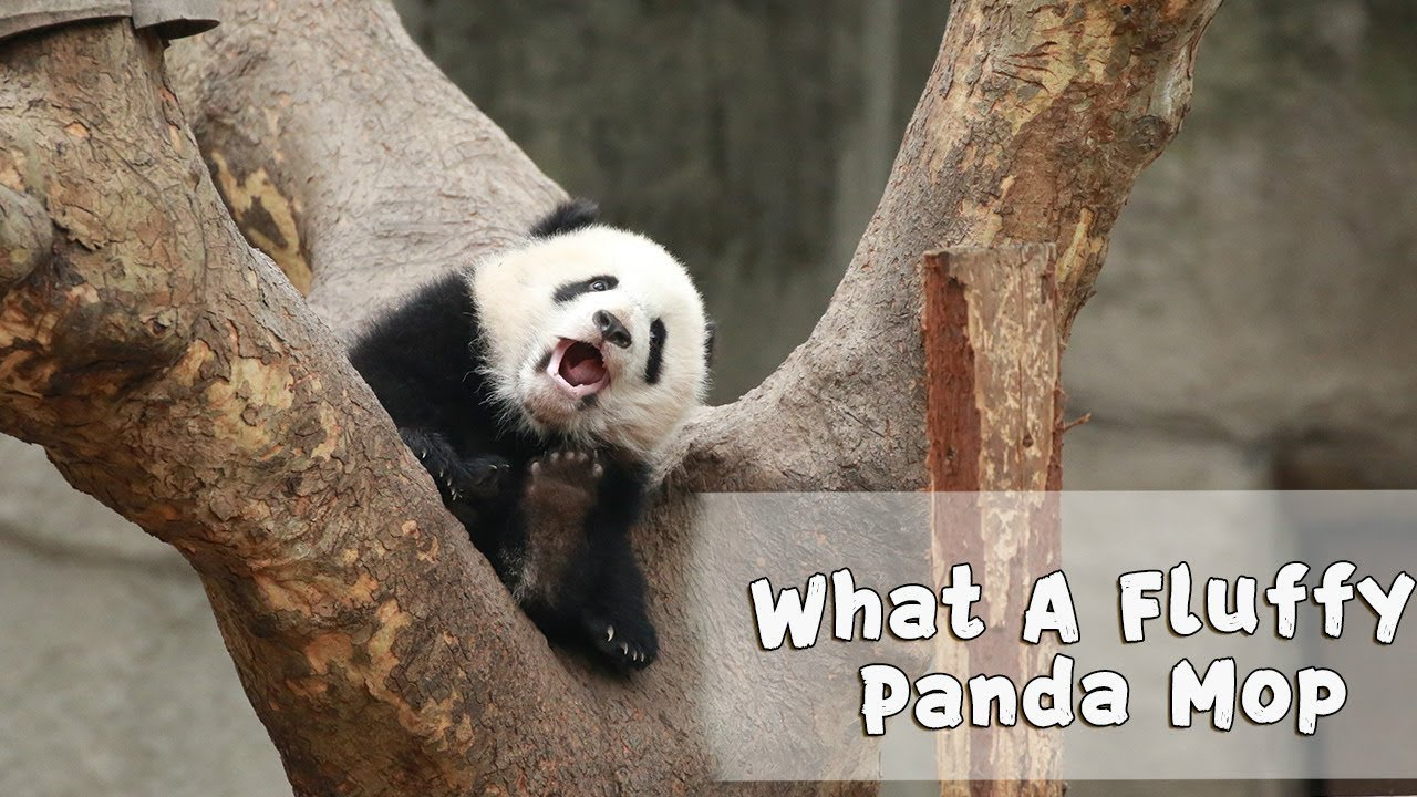 Panda Mop