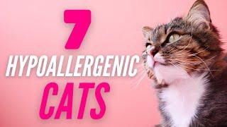 7 Hypoallergenic Cats