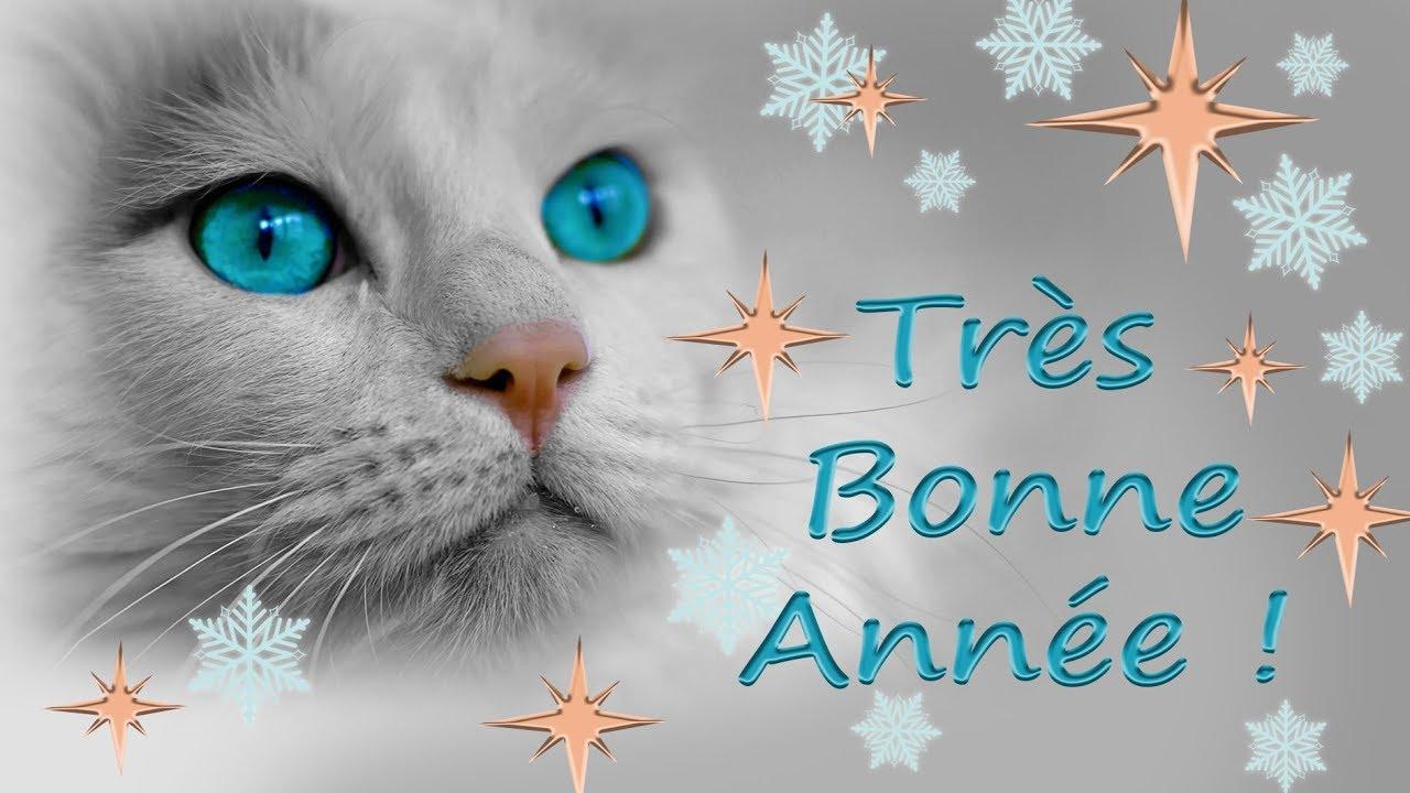 Carte de v ux bonne ann e 2019 chats chatons youtube - Image animaux gratuite ...