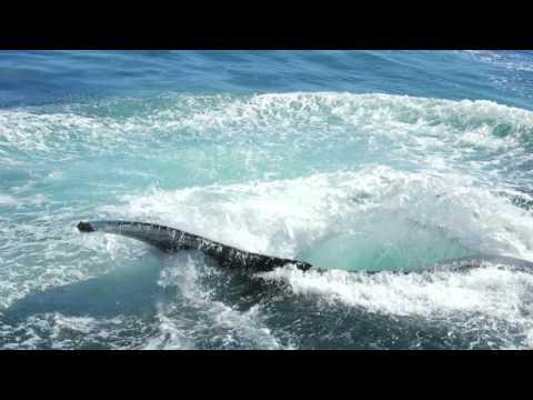 Boston Harbor Cruises New England Aquarium Boston MA Whale Watching 9/27/2015