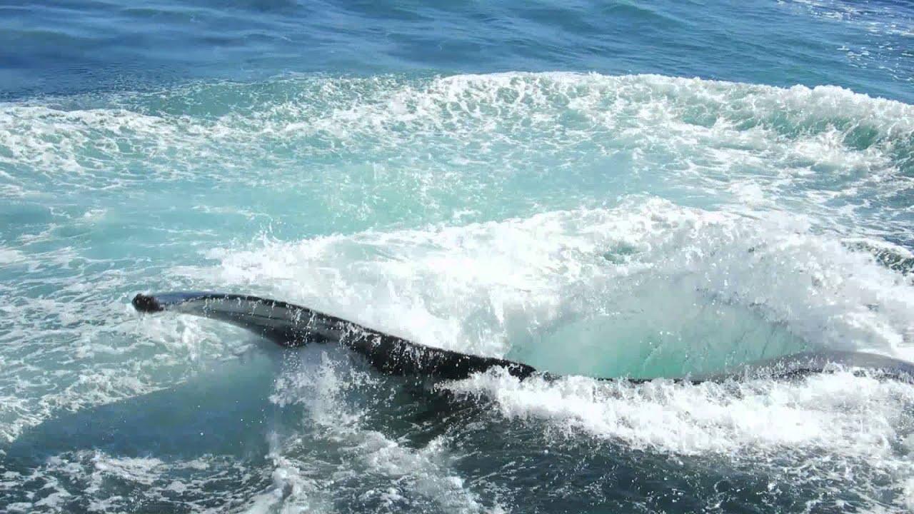 Boston Harbor Cruises New England Aquarium Boston Ma Whale Watching 9 27 2015 Youtube