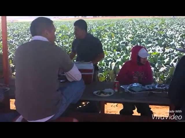 CUADRILLA #12 DE BETERAVIA FARMS SANTA MARIA CALIF