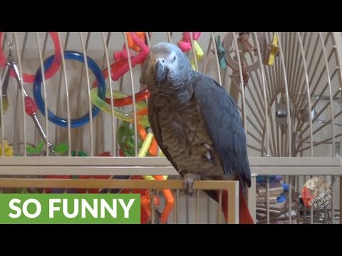 Bossy parrot tells owner to be quiet