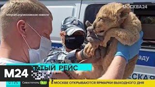 Полицейские нашли в автобусе истощенного львенка - Москва 24