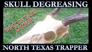Whitetail Skull (NO BOIL) Degreasing