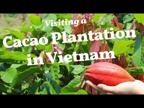 Vietnam Cacao Plantation Visit: Azzan Chocolate