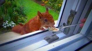 Cute Squirrels 😍 Funny and Cute Squirrels Playing (Full) [Funny Pets]